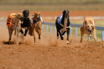 Night at the Dogs for 2 - Save 58% at Bellvue - Manchester Daily-Deal-298521